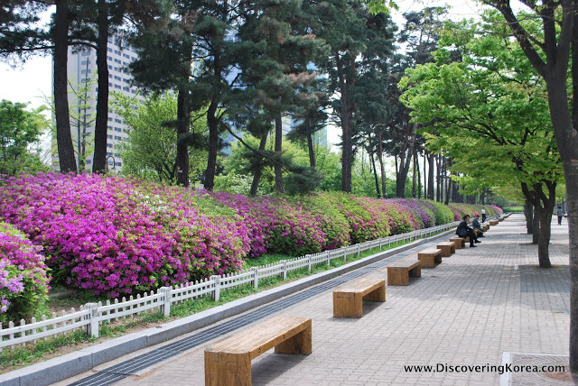 A row of bushes with pink flowers on the left, trees behind, bench seating on the roadside.