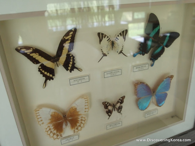 A glass cabinet with six different colored butterflies on display, on a white background.