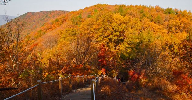 Mountainside with fall colored leaves in orange and red, with a hiking trail going into the vegetation at Cheonggysean.