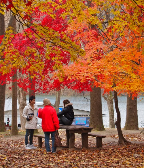 Three people sitting on a bench under a tree with spectacular orange and red autumn leaves, in Korea.