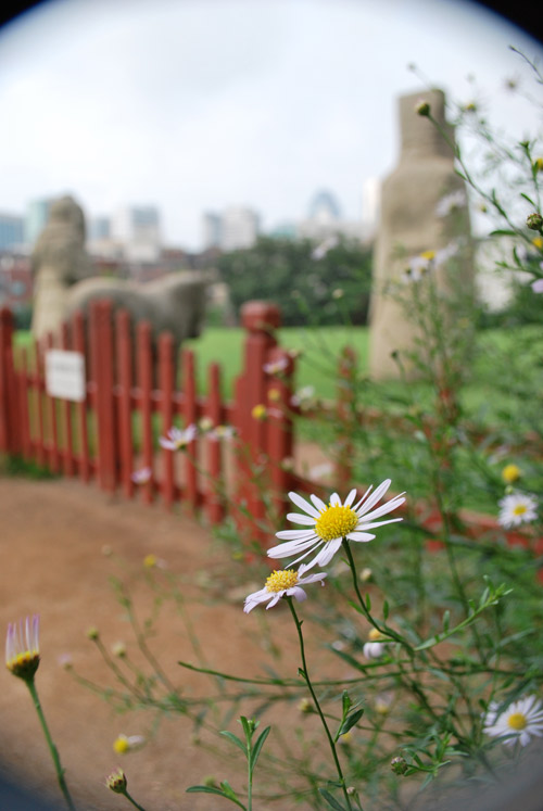 A close up of a white flower with a yellow center, the background is a red gate leading to stone structures of Queen Jeonghyeon's tomb, in soft focus.