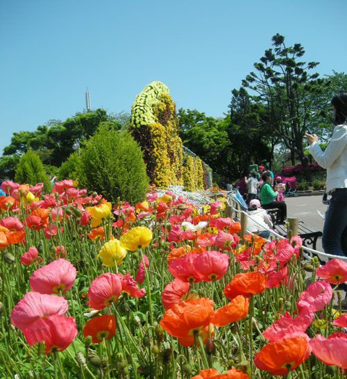 Red, orange, and yellow flowers in Freedom Park, Incheon. To the right of the picture are people taking photos, and the background is blue sky and vegetation.