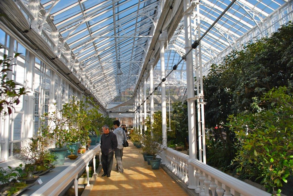 A walkway inside Daeonsil glass house, to the left of the frame is a shelf with small plants in pots, to the center is a brick walkway with people looking at the plants, and to the right of the frame is tall vegetation. Through the glass roof, blue sky is visible.