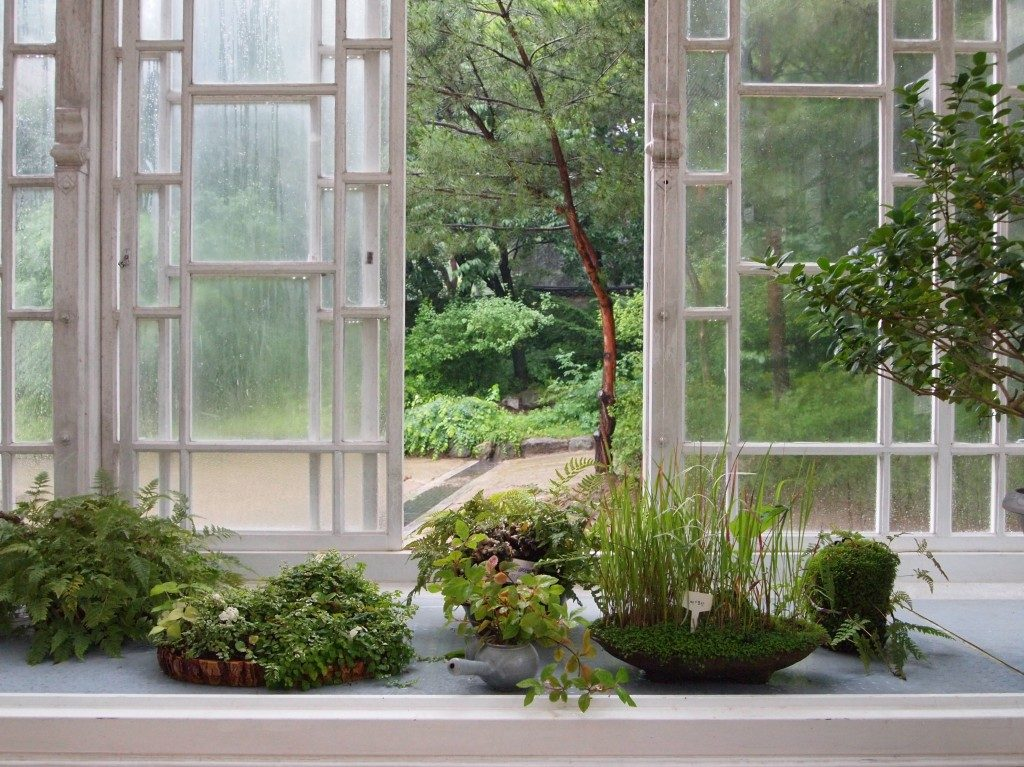 View out of a window at Daeonsil, white framed, to the inside, small succulent plants sit on a windowsill, and through the window a courtyard and vegetation.