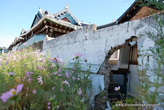 A white wall, with a large hole in it, to the left are wildflowers, and in the background the traditional curved roof of hanok in Jeonju.
