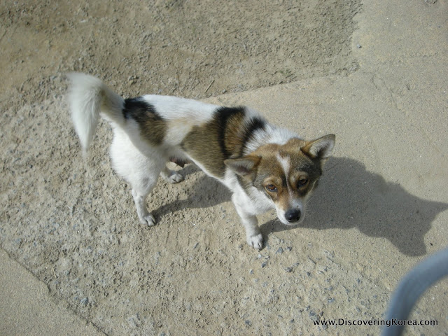 A small dog, white with brown and black markings on a stone floor.