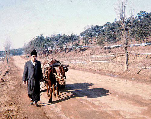 A Korean man to the right of the frame walks an ox pulling a cart along a dirt track. Dry grass and trees in the background and to the right of the frame.