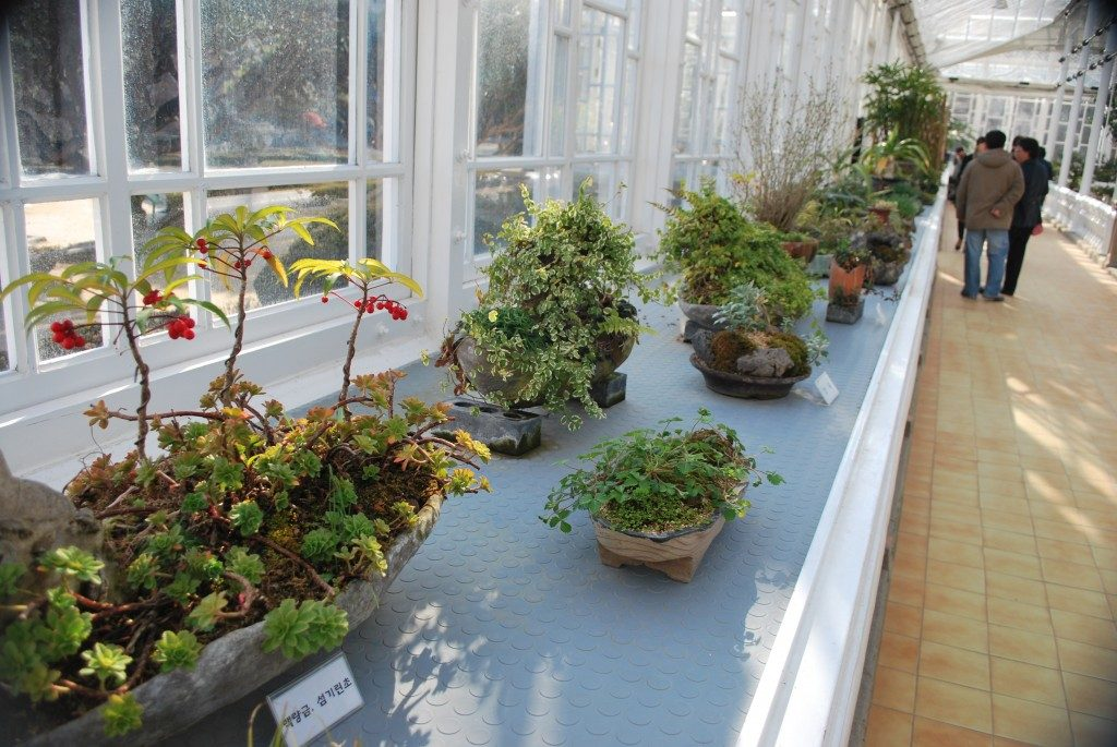 A shelf at Daeonsil glass house, light blue with pots of small shrubs, to the right of the frame is a tiled walkway with people.
