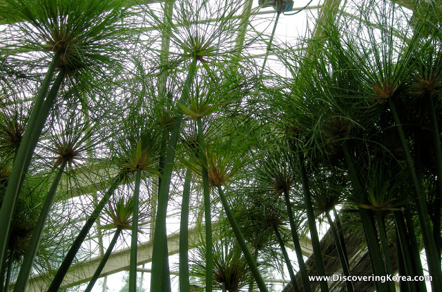 Close up of trees in a glasshouse in Seonyudo island.