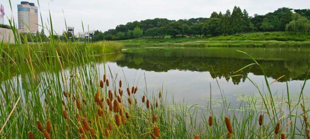 View over a lake in Seoul Olympic Park, in the foreground are long grasses with red seed heads, to the left of the lake is a tall building and the across the lake in the center and right of the frame is a view across grasslands towards trees and bushes.