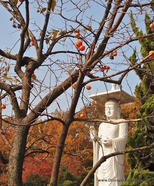 A white stone carving of a monk, behind a citrus tree, with red and orange leafed trees in the background and a blue sky.