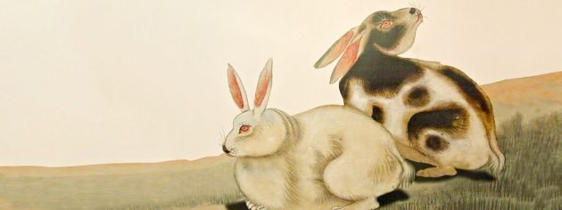 A painting depicting two rabbits, a white one sitting on the ground, and behind it, a black and white one.