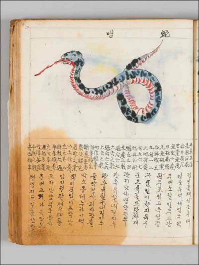 A page of an antique book, showing at the top, a drawing of a snake, black and gray on top, and red and white below, with it's tongue out. Below the snake is Korean writing.
