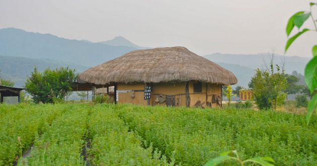 A light brown house with wooden frame and a thatched roof in a field of rows of vegetation and mountains in the background.