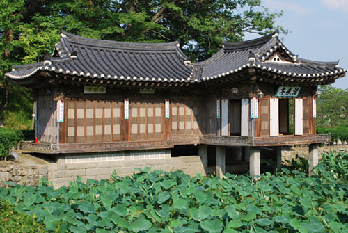 The Hwallaejeong Pavilion juts out over a lotus pond at Seongyojang. A wooden building with traditional curved roof surrounded by lotus leaves in the foreground and trees in the background in bright sunshine.