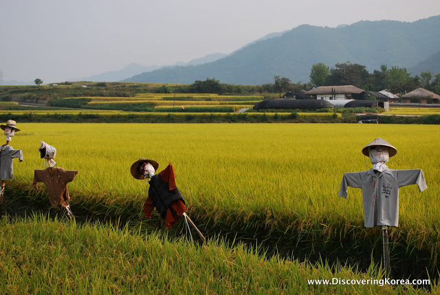 Four scarecrows in a row in the middle of a field of green crops with yellow light, houses in the background and mountains in soft focus.
