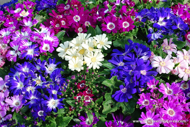 A close up of purple, pink, white and blue spring flowers, with leaves in the background.