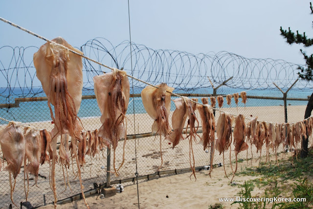 Rows of squid hanging on ropes behind a metal fence with curls of razor wire on the top. In the background is a white sandy beach and bright blue sea.